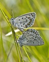 Northern Blue - Near Canso, NS, 2013-07-07