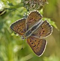 Maritime Copper - North Wallace Road, 2014-07-20