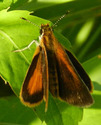 Least Skipper - Apple River, 2017-08-05